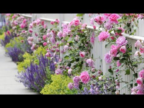 Где Заказать  розы в Подворье на 2019 год.