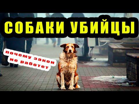 Бродячие Собаки нападают на людей | Почему закон о животных не работает. За и против