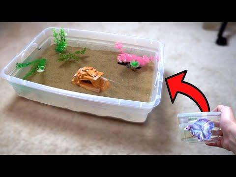 *new* BETTA FISH Indoor MINI POND w/ RARE BETTA! (DIY)