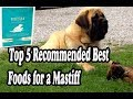 English Mastiff Dog  Food and Information の動画、YouTube動画。