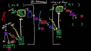 Photosynthesis (Part 2 of 3) - Light Reactions, Z Scheme, and Photophosphorylation