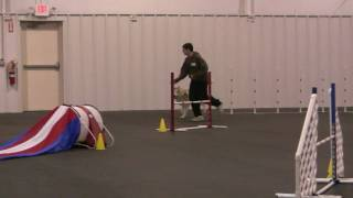 "Siberian Husky ""Raiden"" most embarrassing agility title run!"