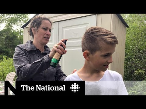 CBC News: The National: Tick season has N.S. community taking extra precautions