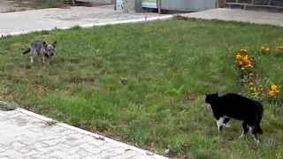 Кот прогнал собаку с поля боя.