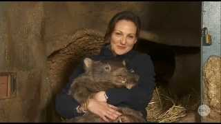 The worlds then-oldest WOMBAT, Patrick, celebrates his 30th birthday! - The Project