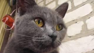 "Бери и снимай: ""Знакомство с Настей. РЕКЛАМА. Котята ищут дом""."
