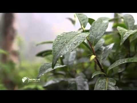 Sri Lanka - Le palais des thés