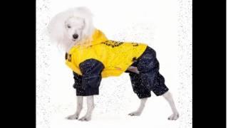 размеры одежды для маленьких собак