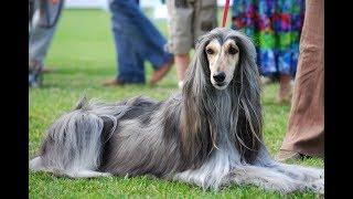 Топ - 5 самых древних пород собак