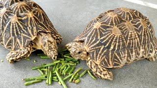 Cute Tortoise on//GUJURAT//Beauty of National. ♥️♥️♥️