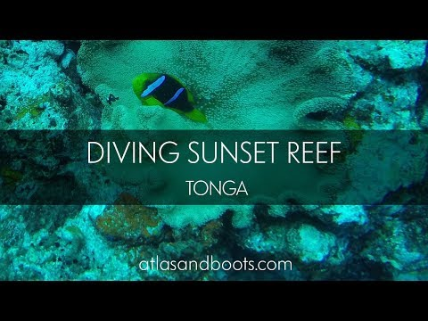 Diving Sunset Reef in Vava'u, Tonga