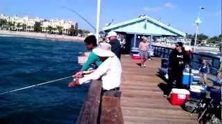 Spanish Mackerel Spring run