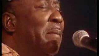 Muddy Waters - I Got My Mojo Working