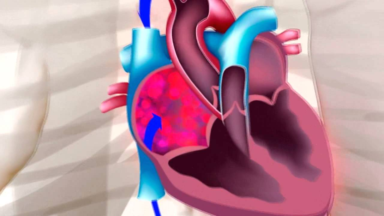 FISIOLOGIA DEL CORAZON - YouTube