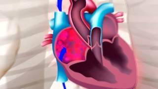 Principales y partes funciones sistema sus circulatorio del