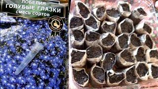 Сеем Лобелию в ЧАЙНЫЕ ПАКЕТИКИ вместо торфяных таблеток. Посев мелких (мелкопыльных) семян