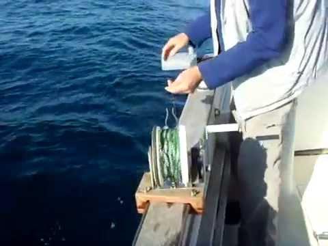 Les règles de la pêche sur la rivière oumba