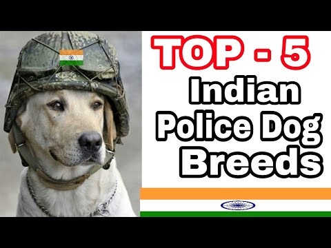 TOP-5 Best Indian Police Dog Breed / Intelligent dog breed / Aryan Dog Club  Aryandogclub