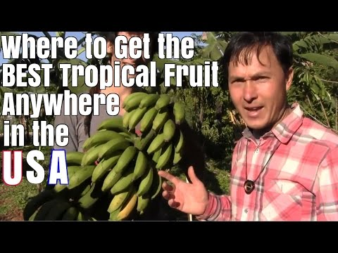 Where to Get the Best Tropical Fruit Anywhere in the USA
