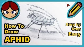 How to draw an Aphid  - Como dibujar un pulgón