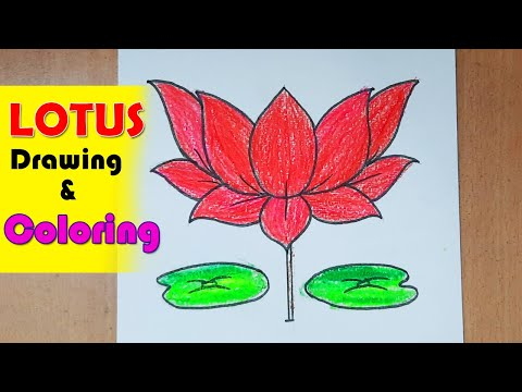 How to draw Lotus Flower Drawing and Coloring Step by Step for Beginners || Flower drawing easy