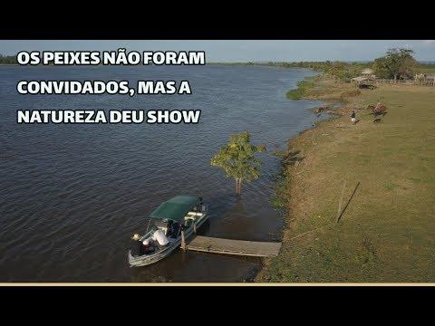 Pescaria no Rio Amazonas, às proximidades de Santarém no Pará