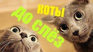 приколы с КОТАМИ !!!  ЛУЧШИЕ ПРИКОЛЫ с кошками под музыку.НОВЫЕ