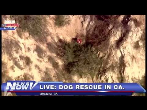 FNN: Pope Arrives in U.S., Dog Rescue in  Southern California, GOP Candidates Speak
