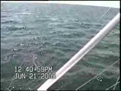 Shark fishing montauk youtube for Montauk shark fishing