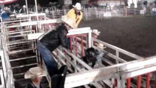 tico montando touro cara branca