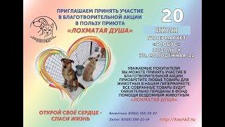 Жители Подольска подарили нам 300 кг корма! Food action for our shelter.