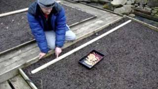 Allotment Diary : Planting out Onion Sets : How to sow Onion Sets in a raised bed easily