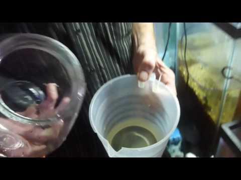 Switching Fish From Freshwater To Saltwater Carls Aquarium