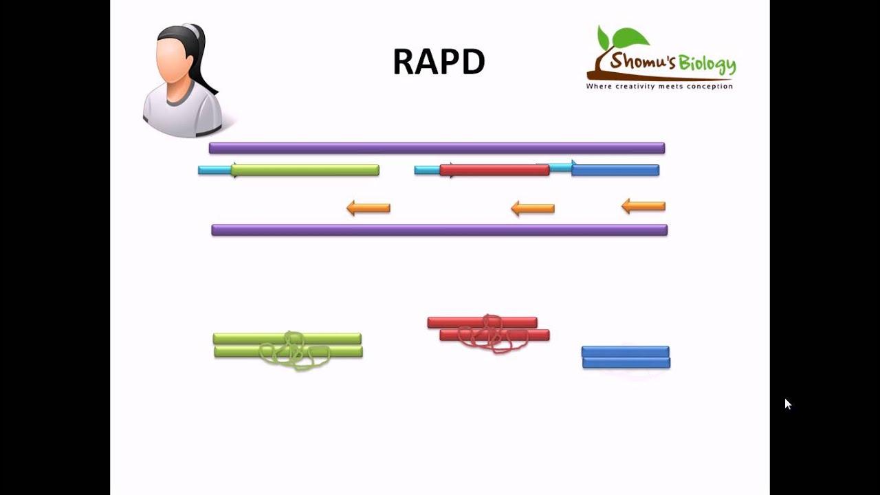 rapd pcr thesis