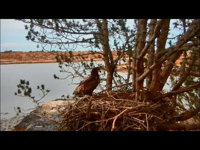 smola-norway-eagle-cam-one-more-day-solo-home-again-1-19-18