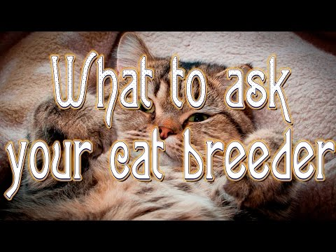 What to ask your cat breeder