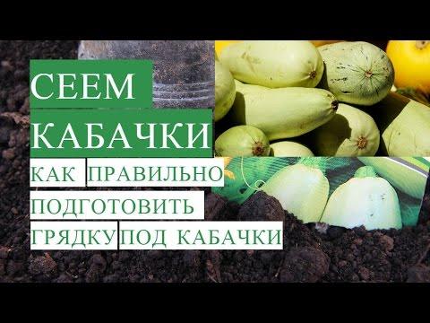 Посадка Кабачков. Как Правильно Подготовить Грядку для Кабачков. | посадить | кабачков | посадка | кабачки | улитку | сажаем | тыквы | тыкву | ingredient | тыкв