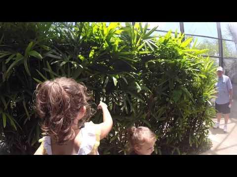 Butterfly World Fort Lauderdale Fl 5.14.2015