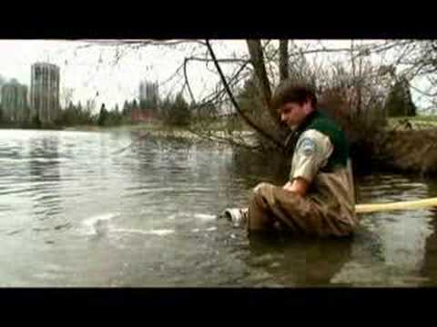 Fishing With Rod:  Rainbow Trout Release