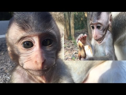 One more Part of a Cute baby monkey's life   Episode 24