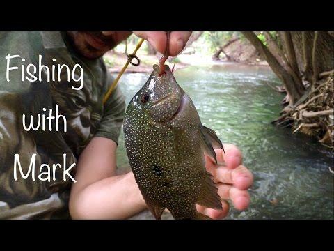 Fishing With Mark : Rio Grande Cichlid, Longear Sunfish, Green Sunfish, Redbreast Sunfish