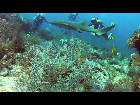 Scuba Diving Miami