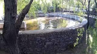 Бассейн с бегемотами в зоопарке