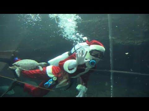شاهد: سانتا كلوز غواص يجذب انتباه زوار حوض أسماك في اليابان …  - نشر قبل 5 ساعة