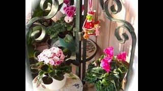 ⛄️Зимний сад, НОВЫЕ ПРИОБРЕТЕНИЯ 🌺 и что я привезла из Флориды, США.(This video is about my winter garden, new purchases and what did I buy in Florida USA? http://youtu.be/HvGv1zdGfuo В этом видео я рассказываю о моих ..., 2014-11-21T16:33:31.000Z)