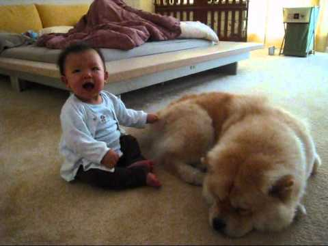 Baby Tries To Wake Up Sleeping Dog Let S Play Youtube