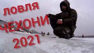Ловля чехони на Дону Зимняя рыбалка 2021 Ловля рыбы на мотыля зимой