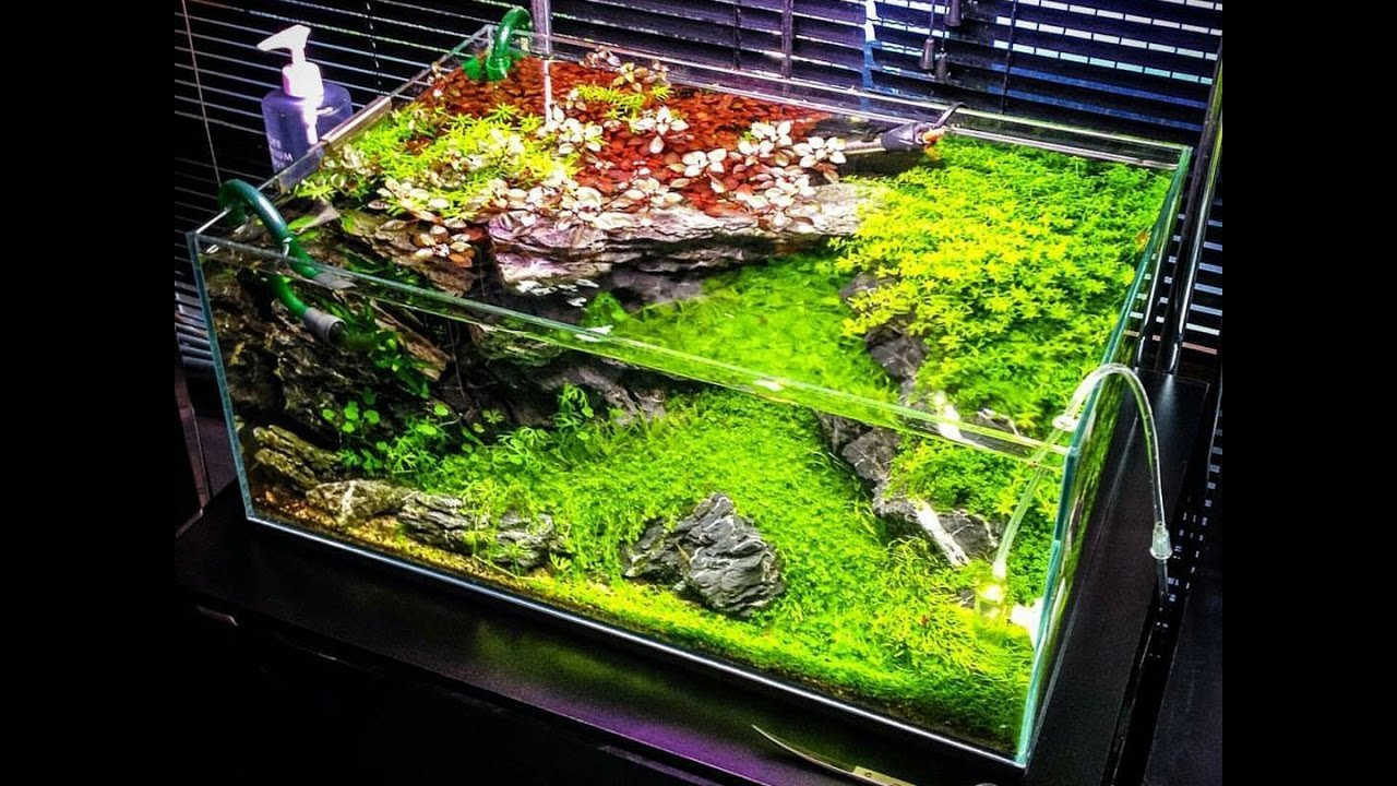 Best aquascape design ideas 2017 youtube - Design aquasacpe ...
