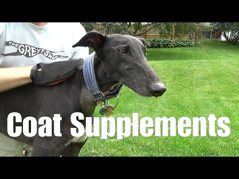 Coat Supplements For Dogs [3.07B]