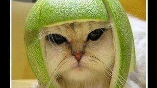 Военный кот за обедом!